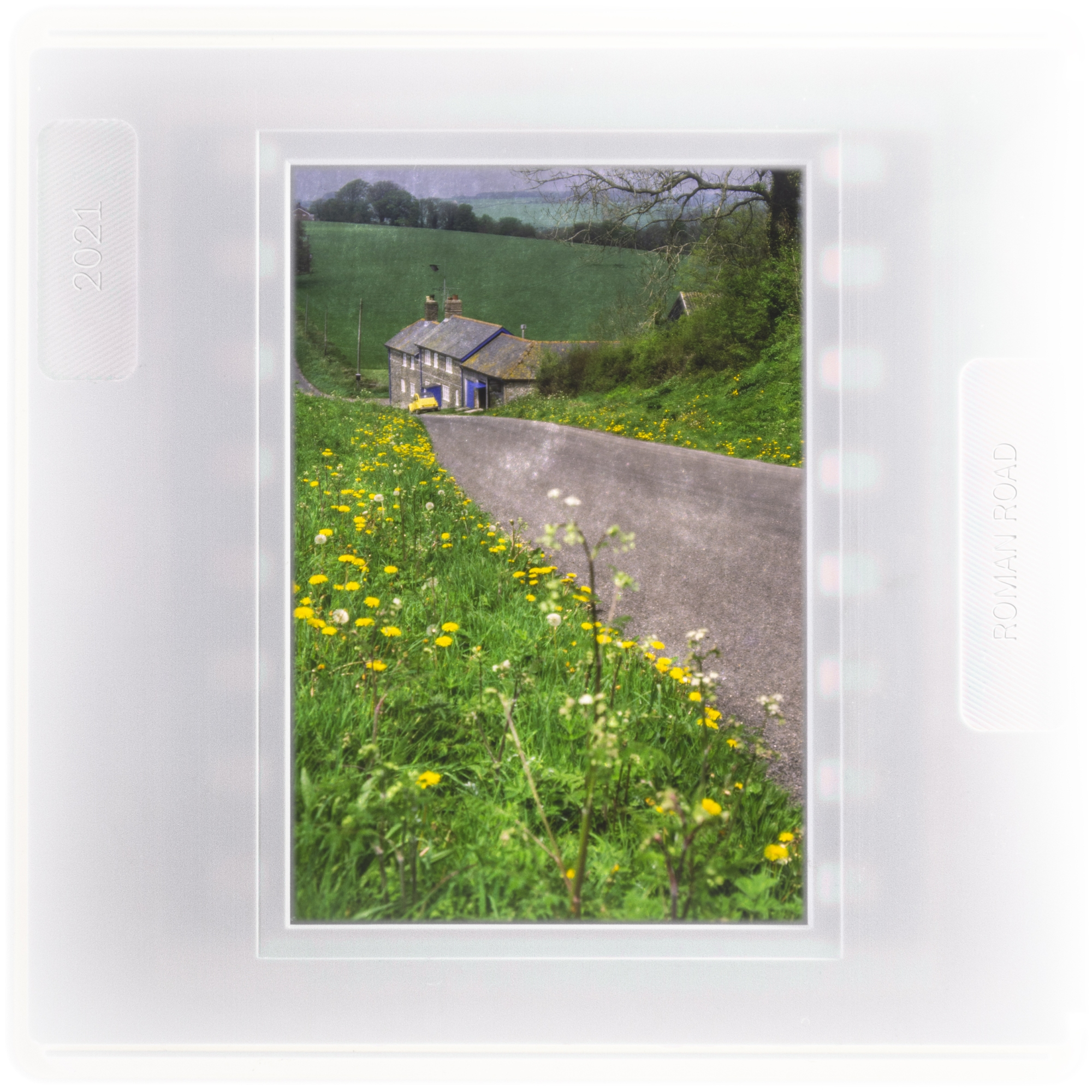 A road running through the Dorset countryside showing the roadside flowers
